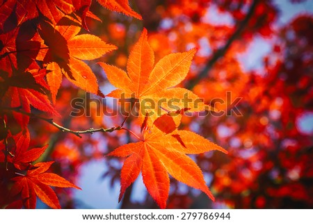 seasonal colorful plant in Japanese park - stock photo