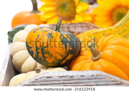 seasonal pumpkin in wooden tray, selective focus, close-up - stock photo