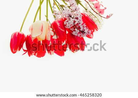 seasonal tulip flower bouquet red color on green stem lilac and lily in spring isolated on white background, closeup, copy space