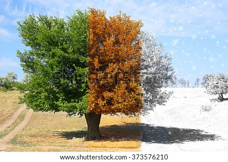 Seasons collage: several photos of beautiful tree at different time of the year - summer, autumn and winter - stock photo