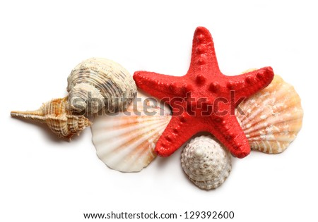 Seastar and seashells on white - stock photo
