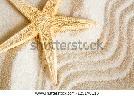 seastar on a wavy sand background