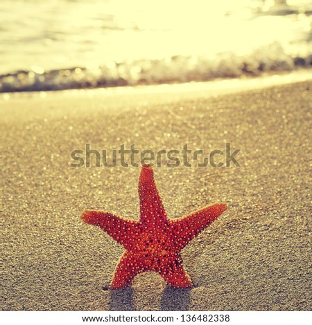 seastar on the shore of a beach at sunset - stock photo