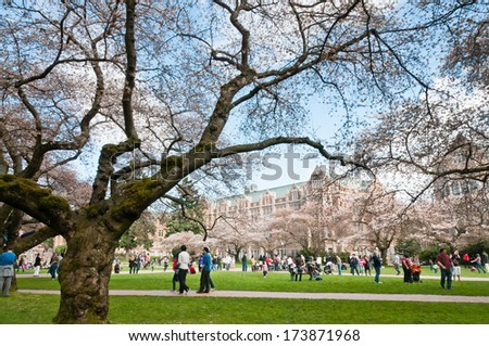 SEATTLE, WA - MARCH 24, 2012: People among Yoshino Cherry trees (Prunus x yedoensis) and collegiate gothic style buildings on Liberal Arts Quad on University of Washington campus. - stock photo