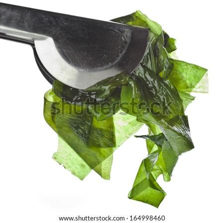 seaweed kelp ( laminaria ) close up isolated on white background - stock photo