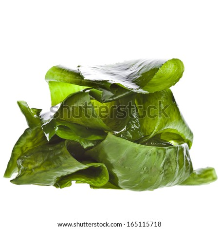 seaweed kelp ( laminaria ) wet heap pile close up macro isolated on white background - stock photo