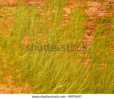 Seaweed on wood - stock photo