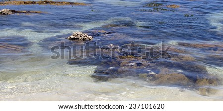 Seaweed swaying  beneath the clear water as the tide ebbs out at Hutt's Beach near Bunbury Western Australia on a sunny early summer afternoon. - stock photo