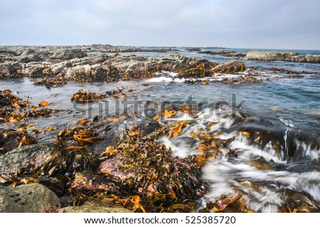 Seaweed with blur wave in shore of Ohau Point Seal Colony, Kaikoura, New Zealand