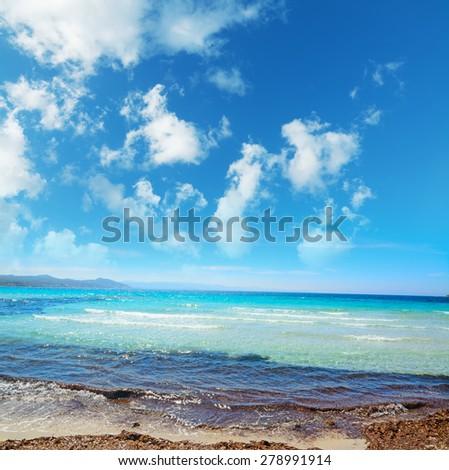 seaweeds in Capo Testa on a cloudy day, Sardinia - stock photo