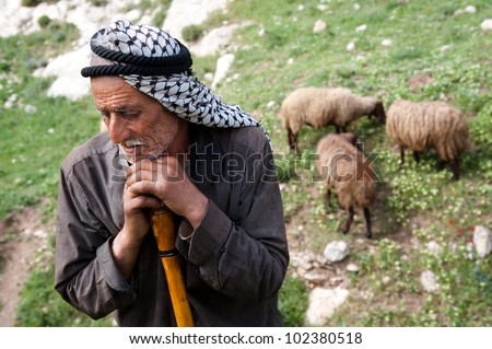 SEBASTIA, PALESTINIAN TERRITORIES - APRIL 7: His way of life threatened by changing politics and economics, an elderly shepherd tends his flocks near the West Bank village of Sebastia, April 7, 2012.