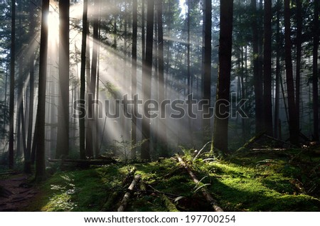 Secluded Sunbeams