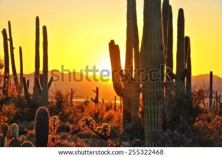 Second Sunset at Saguaro National Park near Tucson Arizona. - stock photo