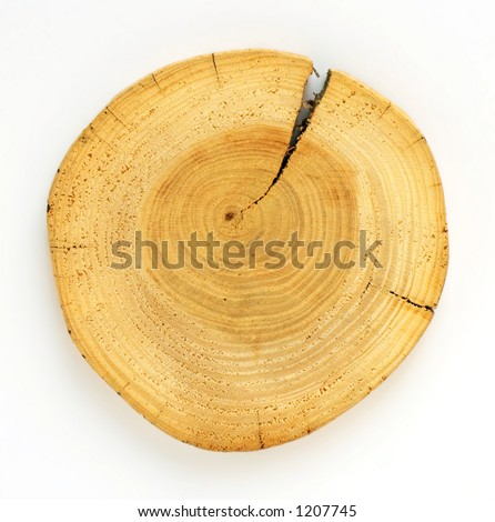 Section of a pine tree