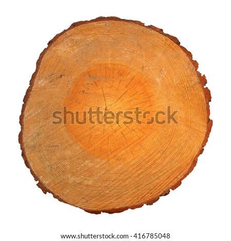 Section of a tree trunk with growth rings isolated over white