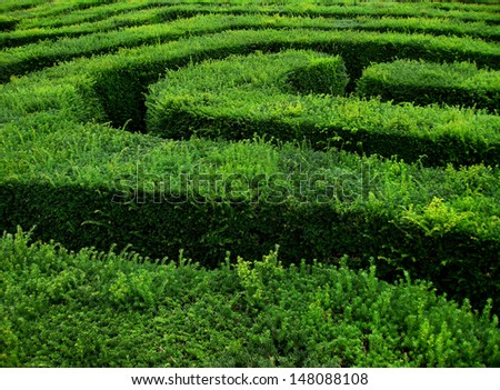 section of hedge maze  - stock photo