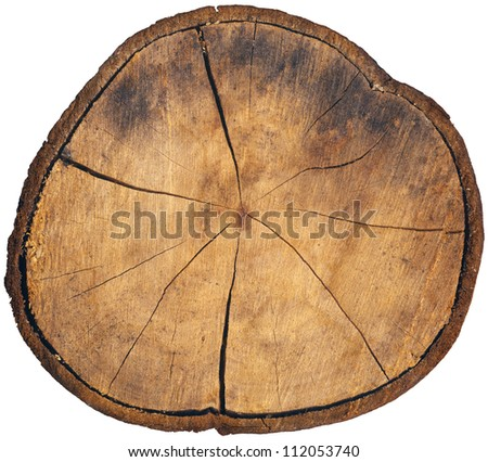 Section of Tree Trunk Isolated Wood cut showing growth rings on white background