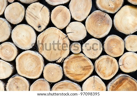 Section plane of natural wood log background - stock photo