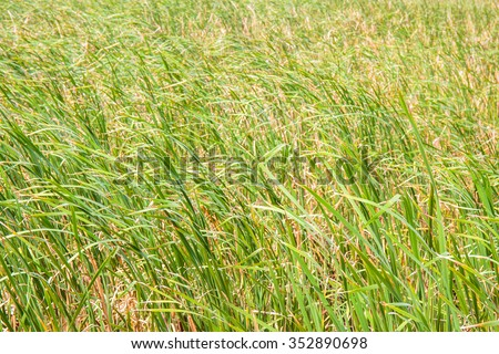 Sedge at lake - stock photo