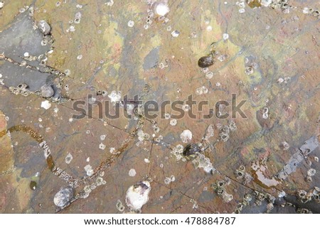 sedimentary rock pattern texture background