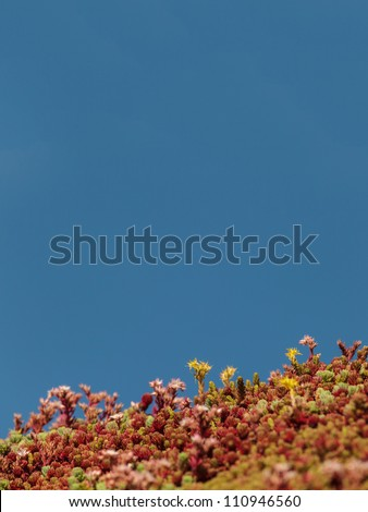 Sedum growing on the roof of a modern building to provide living insulation and cooling - stock photo