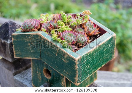 Sedum plants used to make a green roof - stock photo