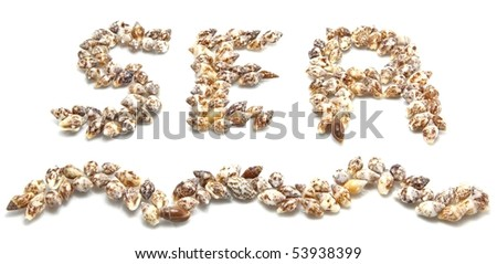see shell isolated - stock photo