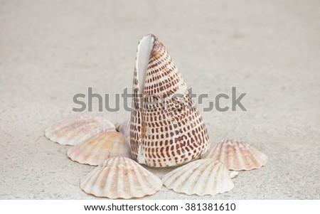 See shells collection - stock photo