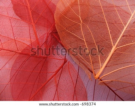 See through fall leaves in a pile - stock photo