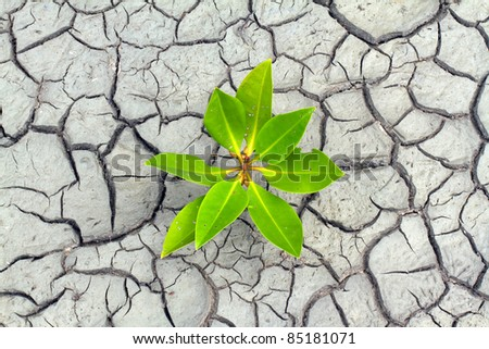 Seed and Dry soil in arid areas