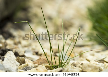 seed germination growth into forest - stock photo