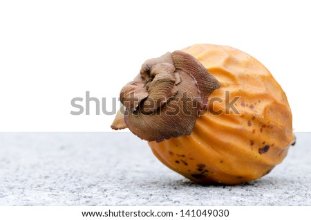 Seed of palm with isolate white background - stock photo