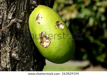 Seed of the tree - stock photo