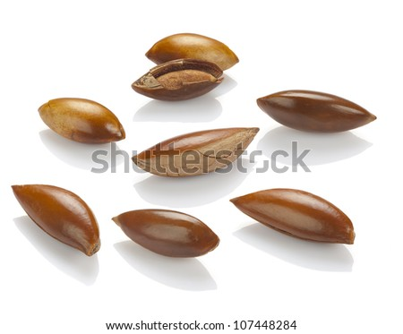 seed or seeds of sapote  isolated on white - stock photo