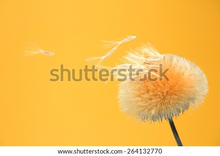 Seed pod with seed blowing in the air on a golden background