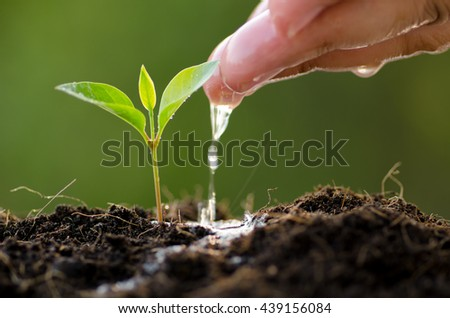 Seeding,Seedling,Male hand watering young tree over green background
