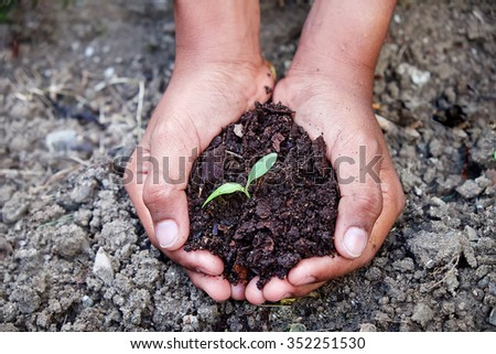 Seeding, Seedling, Sprout growing on female hand for care and planting - stock photo