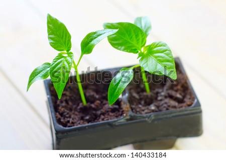 seedling - stock photo
