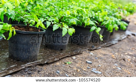 Seedling fresh in plastic black pots. - stock photo