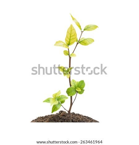 Seedling green plant isolated on white background - stock photo