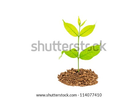 Seedling green plant on a white background - stock photo