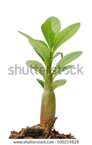 Seedling green plant on a white background. Depending on the soil pile is brown, black and fertilizers. - stock photo