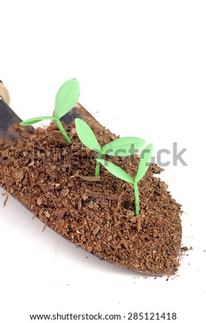 Seedling grow from soil on scope (fake seedling)