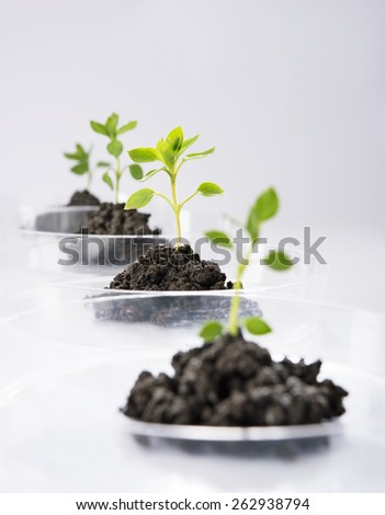 Seedling growing in petri dish in laboratory - stock photo