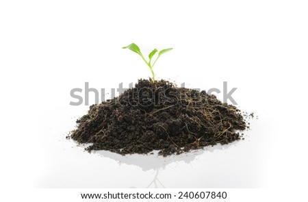 seedling growing on white background - stock photo