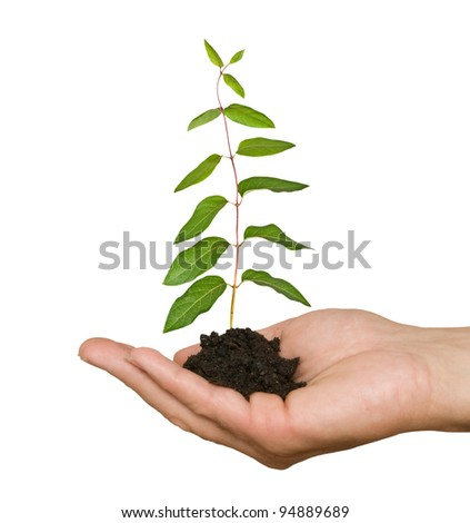 seedling  in hand - stock photo
