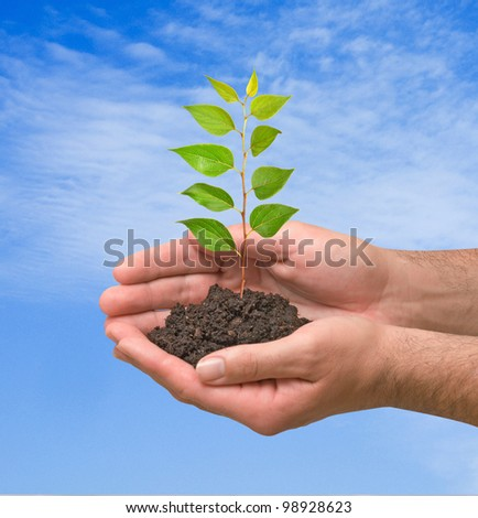 seedling  in hands