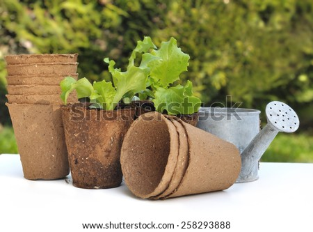 seedling lettuce in biodegradable pots with watering can on white table - stock photo