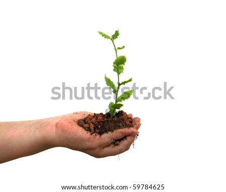 Seedling of oak and human hands on the white background - stock photo