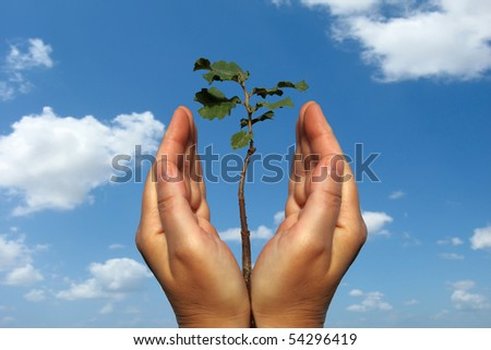 Seedling of oak tree and human hands on the sky background - stock photo